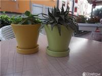 Vazo lulesh,produkte kopshtarie,per ambjente lok..