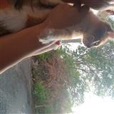 Macok shum shum i bukur dhe i dashur