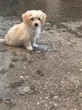 qen maltez me barbocini