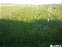 Toke bujqesore prej 5000 m2 ne Durres