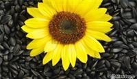 Lule dielli te cilesise se pare