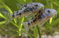 Peshqit e nje akuariumi