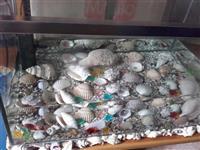 akuarium okazion