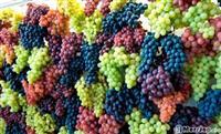 Raki rrushi Prej Qafë Krrabe