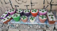 Vazo lulesh natyrale dekorative