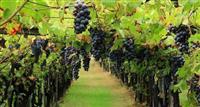 Shiten 10 kunjtal rrush shesh i Zi dhe diskutuwshm