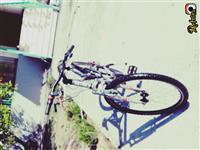 Biciklet leopard