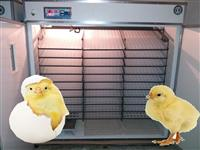 Inkubator Full Aoutomatik 5280 vez