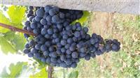 Rrush per ver e raki