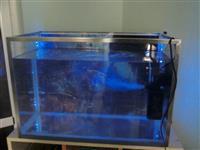Super Okazion Akuarium