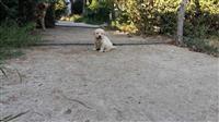 Qen Labrador