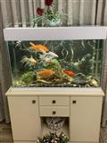 Akuarium peshku