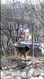 okazion. super qen sharri