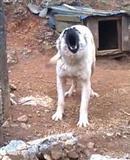 qen sharri