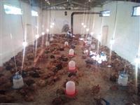 zogj per mish