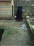 Qen Rotwaler