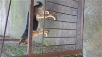 okazion shitet qen pastor reth 9 muajsh