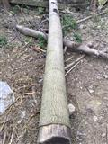 Shes dru dhe fidane te Paulownias