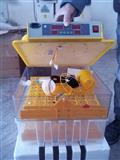 Inkubator Te rinj  full automatik