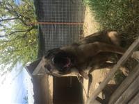 Shitet kangall femer dhe aziat mashkull