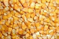 Drithra, miser, grure etj