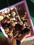 Inkubator per zogj transport gratis ne Shqiperi