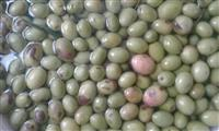 Vaj ulliri frantoi