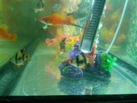 Akuarium peshq dhe aksesore