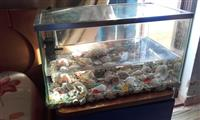 Okazion akuarium